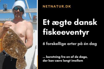 Eventyrligt fiskeri efter kystnære slethvar