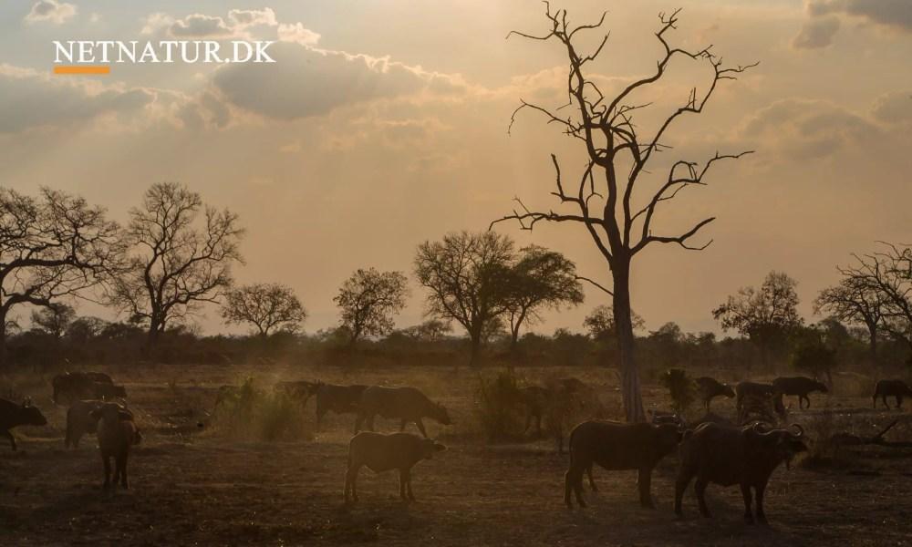 Selous Game Reserve modtager 18 millioner euro