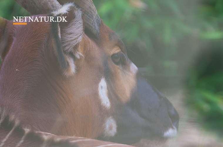 Penge i dyrebeskyttelse