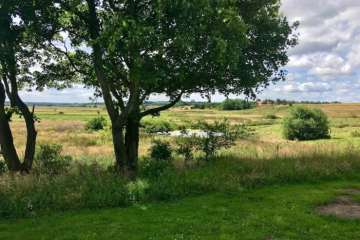Kend dine vildtplanter: Ær - træet med helikopter frø