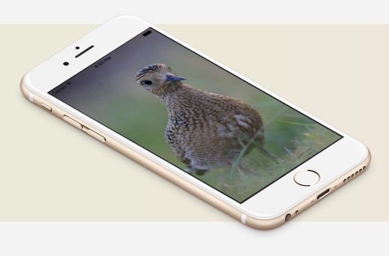 FugleApp - så er fuglene med på farten