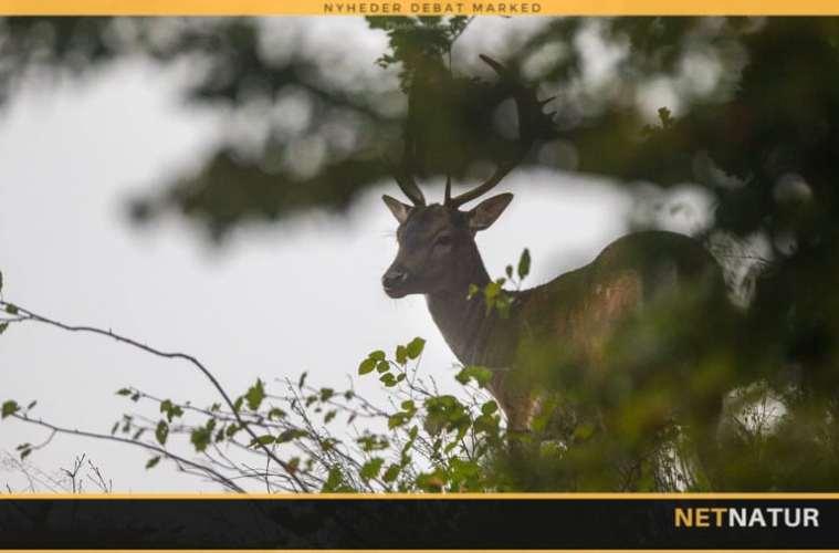 Jagt udlejes på Midtsjælland