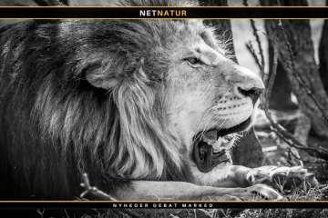 PH'er i Sydafrika stifter ny forening med fokus på jagt og etik