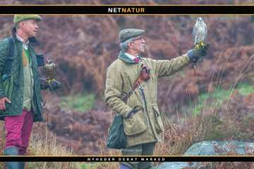 Generel information om jagt med rovfugle