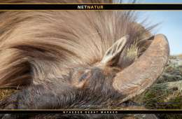 Jagtskud fra New Zealand