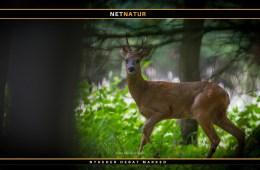 Naturstyrelsens forvaltning af fællesejet – og dertil hørende jagtprivilegier