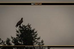 8. sæson af ørne-TV er på vingerne