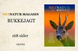 Netnatur Magasin kun om bukkejagt