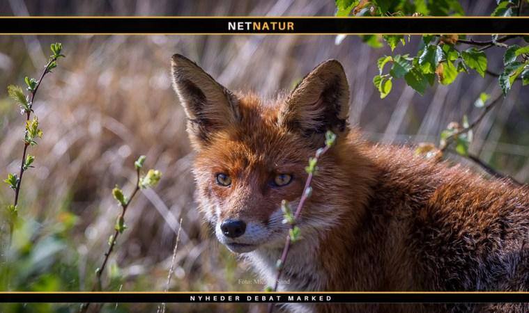 Bringer tysk jæger en naturfotografs liv i fare?