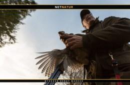 Jagttegnsmidler
