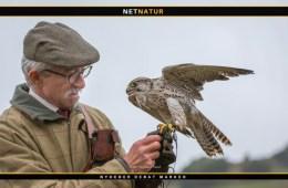 Hold af rovfugle