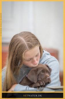 Hund og pige