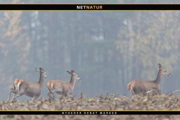 Polen og jagt