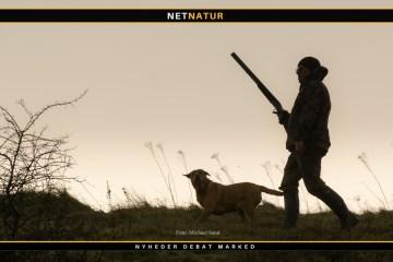 Skydeprøve til jagt med hagl, riffel og bue