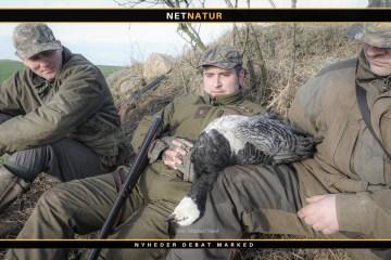 Bramgås og jagt