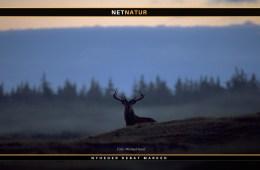 Danskere vilde med overnatning i naturen