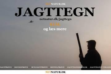 Dansk jagttegn - vilkår og priser 2021/22