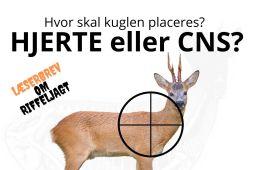 CNS-kuglen