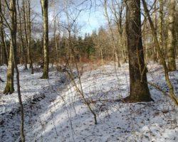 12,6 ha skov ved Rødding