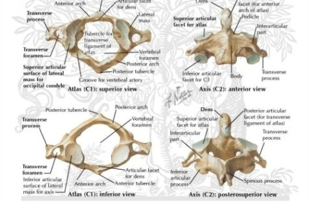 interior vertebrae diagram » Full HD MAPS Locations - Another World ...