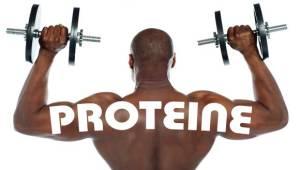 Welche Proteine für Muskelaufbau