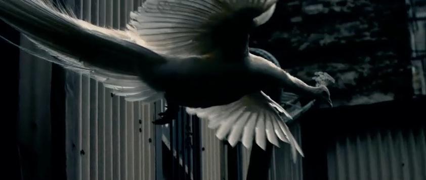 fliegender Pfau