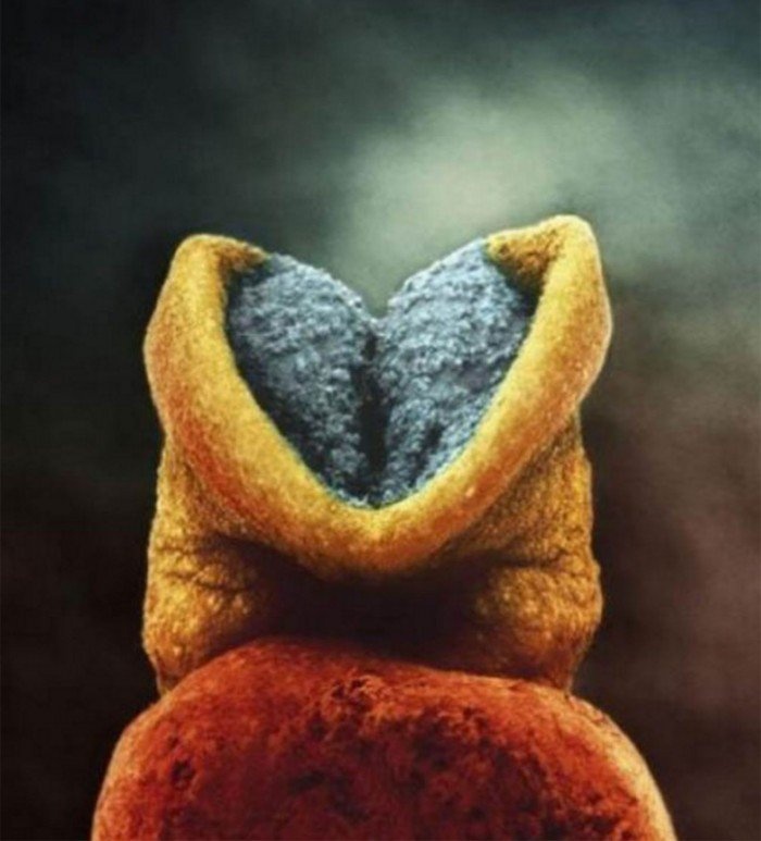 magazine-life-evolution-embryon-developpement-gris-cerveau