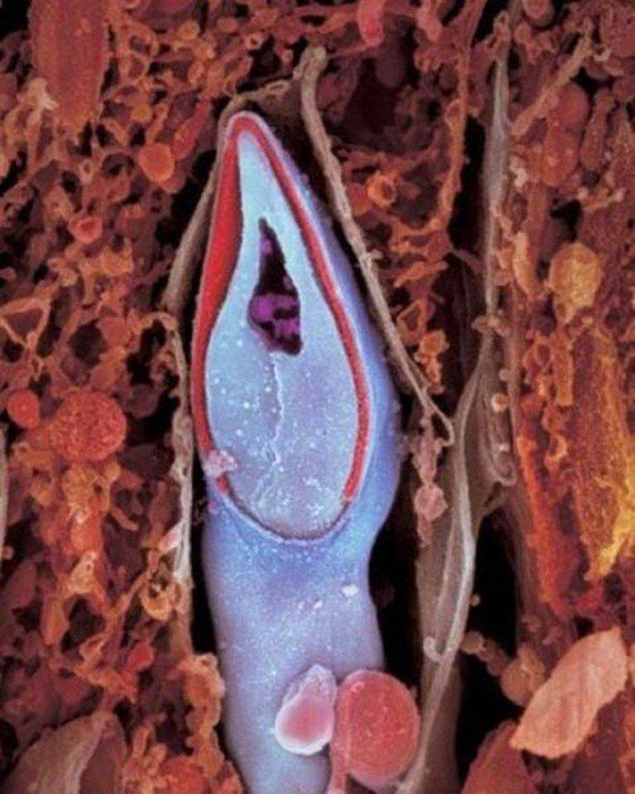 magazine-life-evolution-embryon-spermatozoide-code-genetique-pere