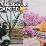 Cherry Blossom in Singapore
