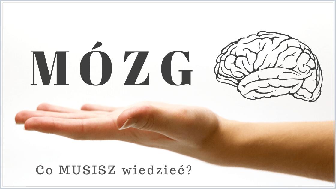 Ilustracja tytułowa: Mózg - co musisz wiedzieć?
