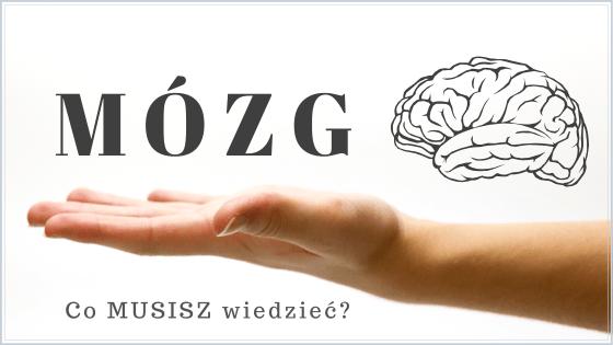 Ilustracja tytu艂owa: M贸zg - co musisz wiedzie膰?