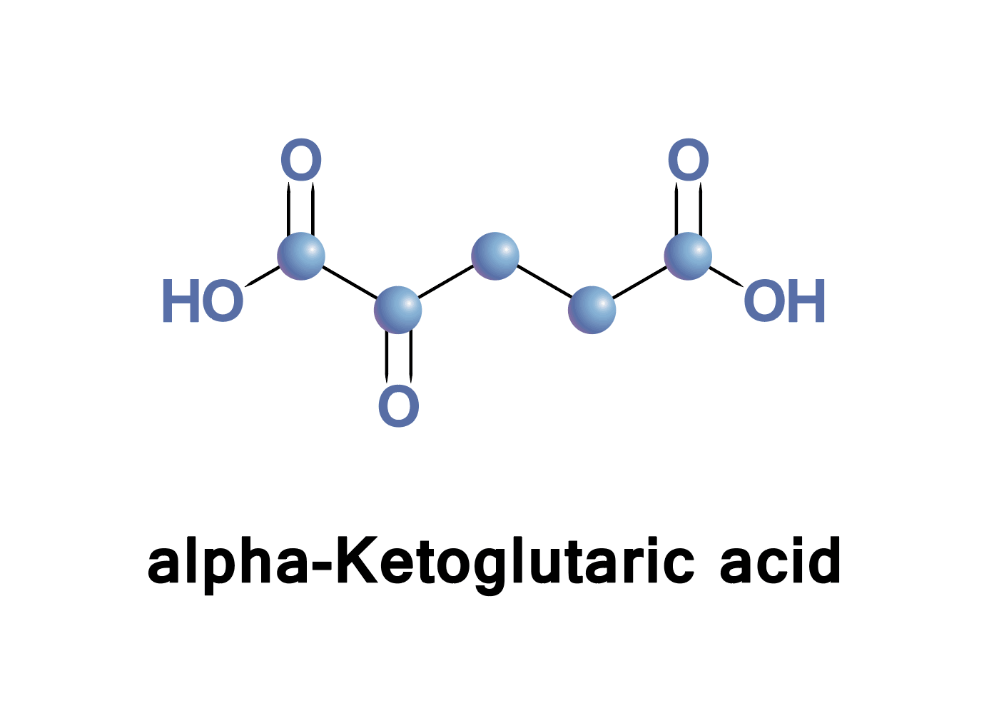 Alpha Ketoglutarate Malate And Citrate Citric Acid