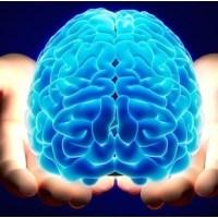 شکل مغزتان نشانه شخصیت شماست!/شواهدی جالب از تحلیل تصاویر مغزی