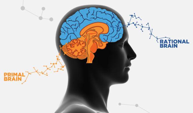 primal brain - rational brain