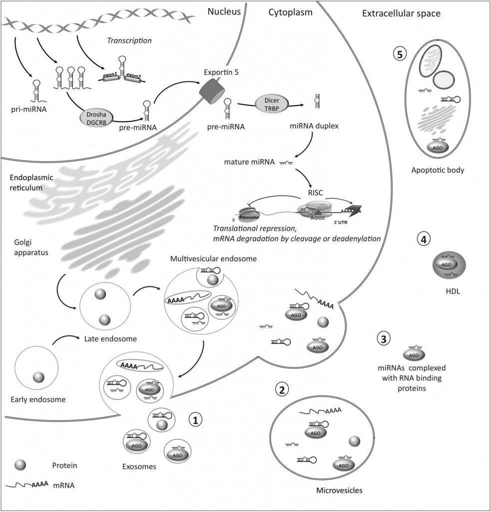 micrornas as biomarkers in pituitary tumors
