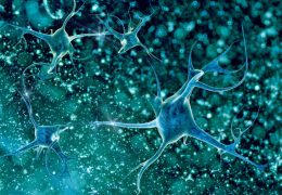 The Proteins That Wake Sleeping Neural Stem Cells