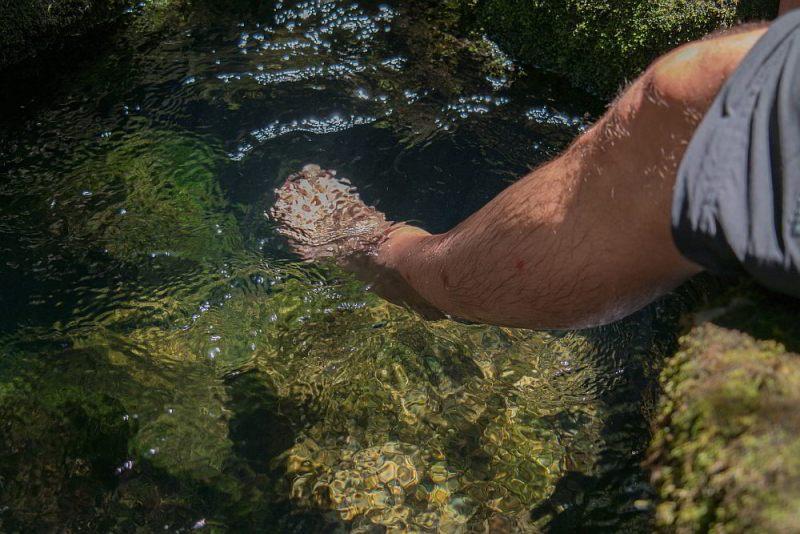 Heilende Quelle für Sandflies-Bisse