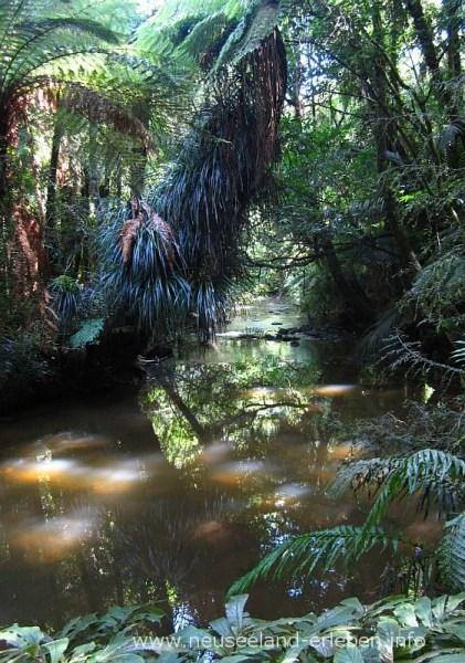 Der Pakoka River auf dem Weg zum Wasserfall