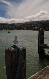 Ausblick auf das Örtchen Akaroa vom Pier aus.