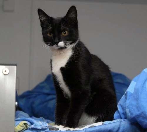 Schwarzes Kätzchen mit weißen Pfoten hat sich ins Metronom verlaufen.