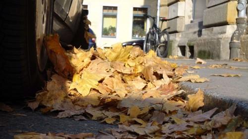 Herbst - gesehen auf der Pulsnitzer Straße