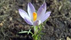 Frühling auf der Sebnitzer