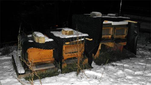 Das Winterquartier der Hecht-Bienen