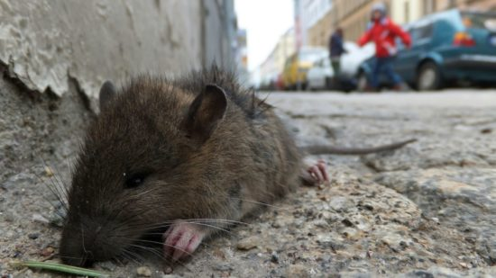 Aus die Maus.