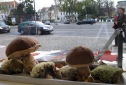 Pilze ohne Sporen