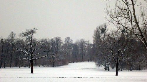 Das weiße Deckchen auf dem Alaunplatz ist dünn, reicht es zum Skispringen?