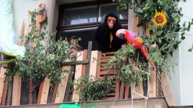 Wer macht sich denn da zum Affen?