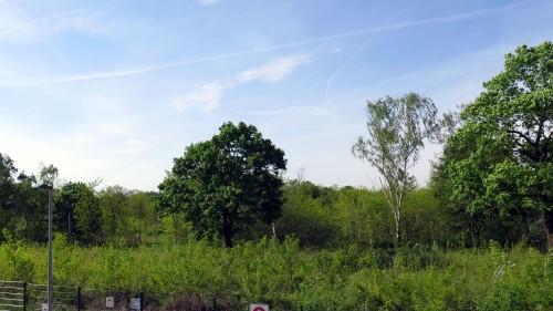 Derzeit trifft schon fast die Bezeichnung Wald auf das Gelände zu.