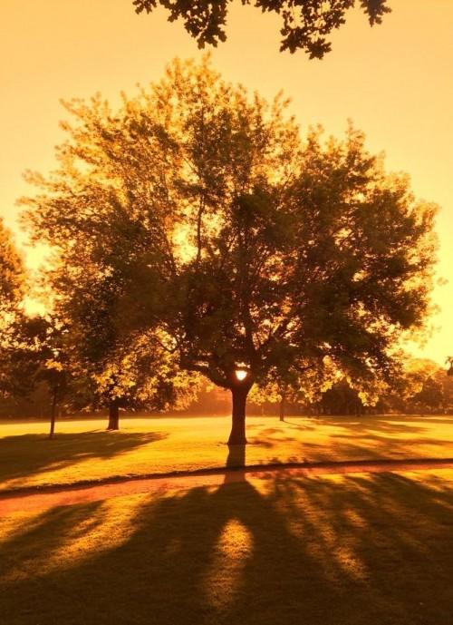 Alaunplatz im Morgenlicht ... danke an Fabian für das Foto.