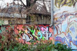 Hinterhof Dezember 2011